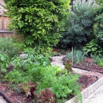 The vegetable beds